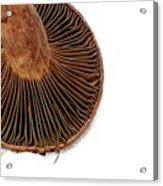 Mushroom Gills Acrylic Print