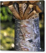 Mushroom Growing From A Birch Tree Acrylic Print