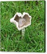 Mushroom Heart Acrylic Print