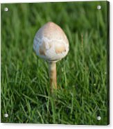 Mushroom In The Grass Acrylic Print