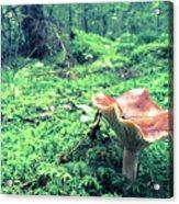 Mushroom In The Green Wood Acrylic Print