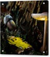 Mushroom Lantern Enchanted Forest Acrylic Print