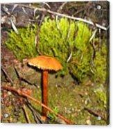 Mushroom Microcosm Acrylic Print
