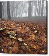 Mushroom Mound Acrylic Print