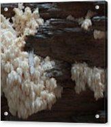 Mushroom On Idaho Log Acrylic Print