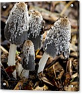 Mushroom Quartet Acrylic Print
