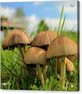 Mushroom Acrylic Print by Sheila Werth