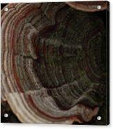 Mushroom Shells Acrylic Print
