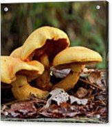 Mushroom Trio Acrylic Print