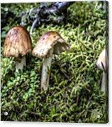 Mushrooms Trio Acrylic Print