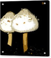 Mushrooms For Two Work Number 11 Acrylic Print