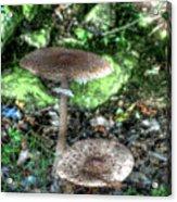 Mushrooms Hdr Acrylic Print