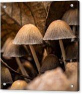 Mushrooms Hidden Between The Leaves Acrylic Print