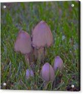 Mushrooms In Grass Acrylic Print