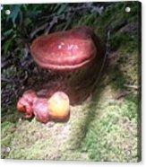 Mushrooms In Spotlight  Acrylic Print