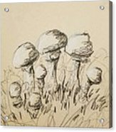Mushrooms On Toned Paper With Charcoal Acrylic Print