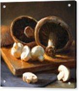 Mushrooms Acrylic Print by Robert Papp
