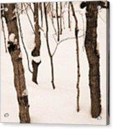 Muskoka Winter 3 Acrylic Print