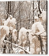 Muskoka Winter 6 Acrylic Print