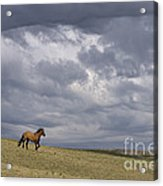 Mustang And Stormy Sky Acrylic Print