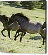 Mustang Mares Acrylic Print