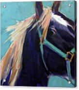 Mustang Sally Acrylic Print