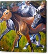 Mustang Spirit Acrylic Print