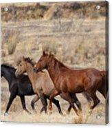Mustang Trio Acrylic Print by Mike  Dawson