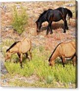 Mustangs Acrylic Print
