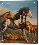 Mustangs On The Run Acrylic Print