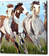 Mustangs Running Free Acrylic Print