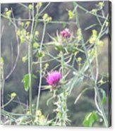 Mustard And Thistle Acrylic Print