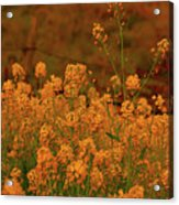 Mustard Garden Acrylic Print