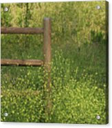 Mustard Grass And Fence At Entrance To Peters Canyon Acrylic Print