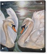 Mute Swans - River Severn Acrylic Print