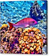 Mutton Reef Acrylic Print