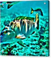 Mutton Snapper Acrylic Print