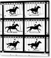 Muybridge: Horse Acrylic Print