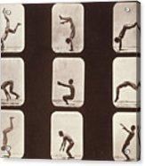 Muybridge Locomotion Back Hand Spring Acrylic Print by Photo Researchers