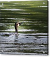 Cormorant - My Catch For The Day Acrylic Print