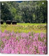 My Country View Acrylic Print by Jennifer Compton