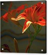 My Daylilies 2 Acrylic Print