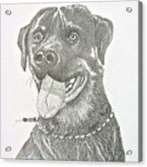 My Dog Kito Acrylic Print