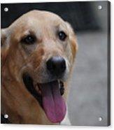 My Dog Ubu Acrylic Print
