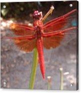 My Dragonfly Acrylic Print