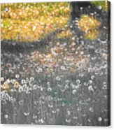My First Manipulated Image Crowd Of Dandelions In Shadow Of Tree Branches Acrylic Print