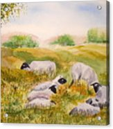 My Flock Of Sheep Acrylic Print