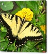 My Garden Visitor Acrylic Print