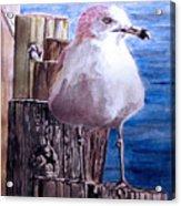 My Gull Acrylic Print