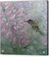 My Hummingbird Acrylic Print